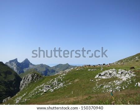Livestock grazing in the Swiss Alps - stock photo