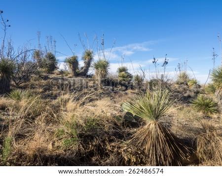 Native Desert Plant Stock Photos Royalty Free Images Vectors Shutterstock