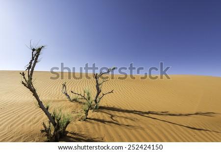 Living trees in the desert near Al Ain city in Abu Dhabi, UAE. - stock photo