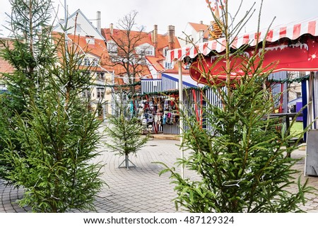Livu square with Christmas trees in the old town in Riga in Latvia. The Livu square was established in 1950