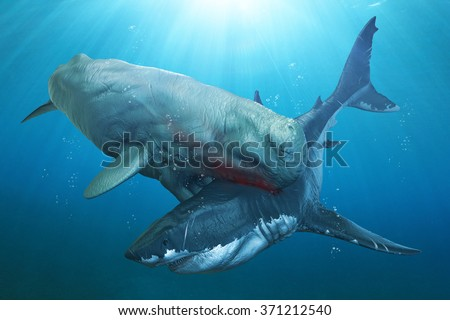 Livyatan vs Megalodon. Megalodon was the largest known shark to ever exist and lived alongside the Livyatan sperm whale named after the Leviathan sea monster. - stock photo