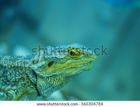 Lizard head close-up perched on log green background blur