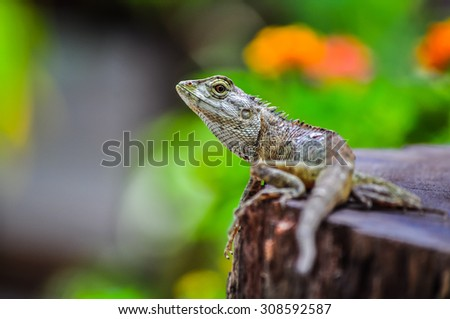 Lizard on stump