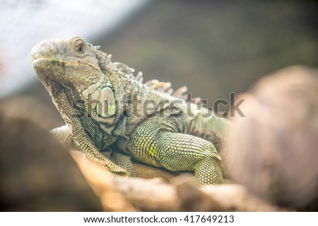 lizard on the log