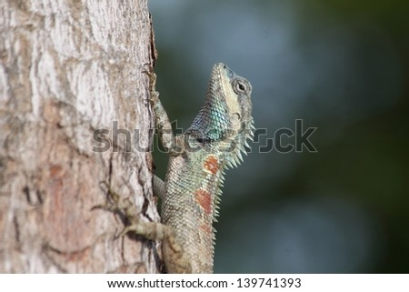 Lizard on the tree.