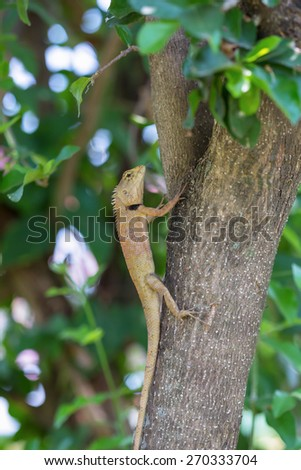 Lizard on the tree - stock photo