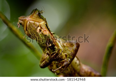 lizard on tree - stock photo