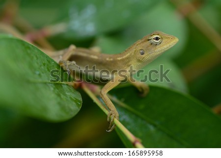 lizard perched on a twig