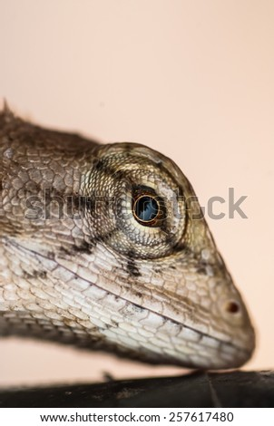 Lizard Profile Close Up - stock photo