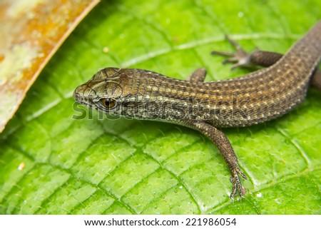 Lizard resting on green leaf - stock photo