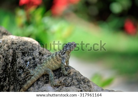 Lizard. Shallow depth of field. Nice bokeh.