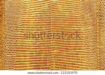 Lizard skin texture - stock photo