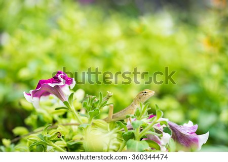 lizard with a long tail standing on nature background