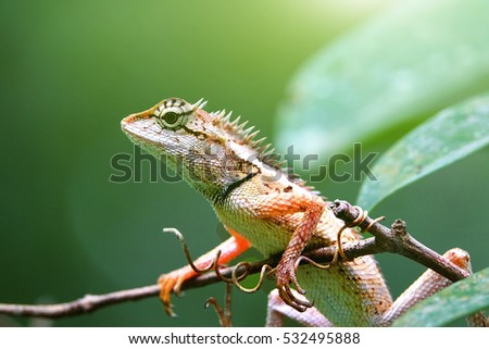 Lizards on tree with sunlight effect and blurry green leaf background:Close up,select focus with shallow depth of field.