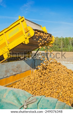 loadding of potato on harvest  - stock photo