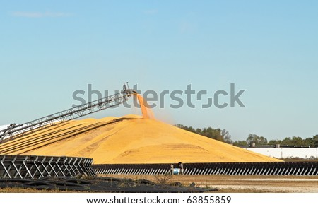 Loading grain from harvesting onto a pile for storage