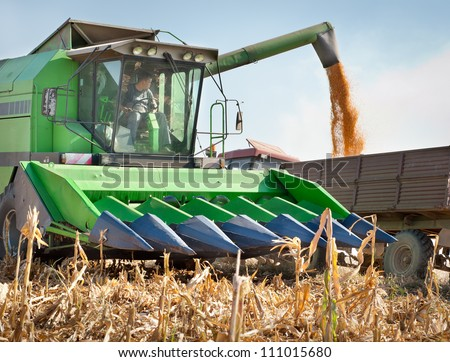 Loading of grain of corn in the  tractor trailer - stock photo
