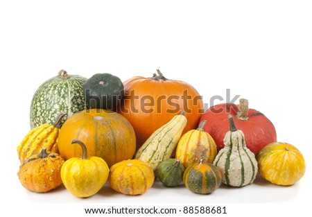 loads of decorative pumpkins isolated on a white background - stock photo