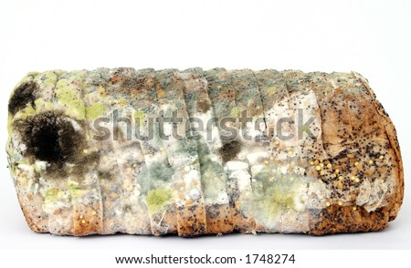 Loaf of mouldy brown bread, macro close up, isolated on white, - stock photo