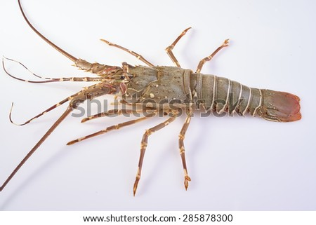 lobster isolated on a white studio background