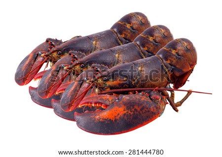 lobster isolated on white background,lobster set.