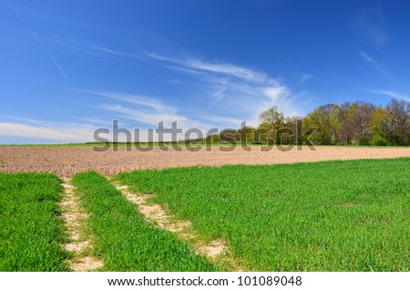 Local country road in a green field near Tomaszowice village , Poland