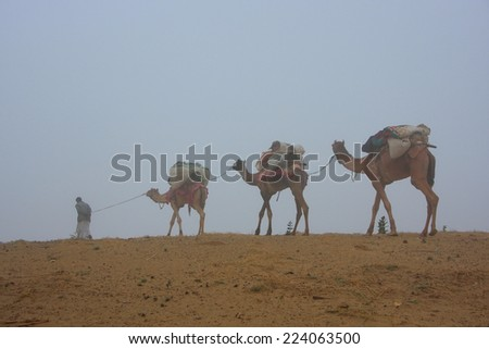 Local guide with camels walking in early morning fog, Thar desert, Rajasthan, India - stock photo
