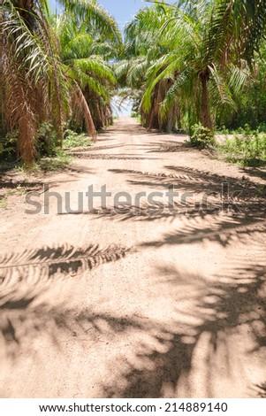 Local road in palm jungle - stock photo