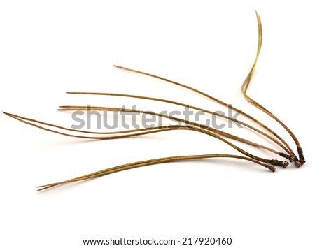 Lodgepole pine needles on white background in horizontal format - stock photo