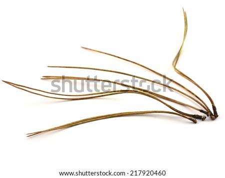 Lodgepole pine needles on white background in horizontal format - stock photo