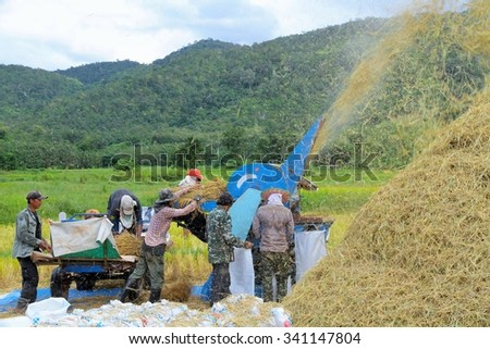 LOEI, THAILAND - NOVEMBER 10, 2015 :Farmers work on harvester machine to separate the rice paddy from the harvested field to next process of rice production - stock photo