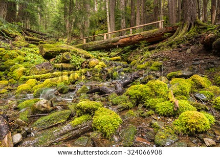 Log bridge over Rocky Creek, on the High Divide/Seven Lakes Trail, in Olympic National Park, near Port Angeles, Washington. - stock photo