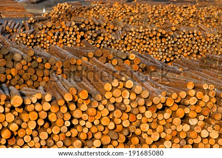 Log Ends Wood Rounds Cut Measured Tree Trunks Lumber Mill - stock photo