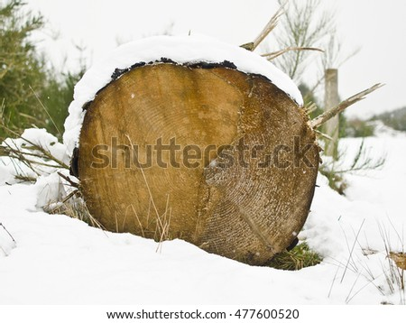 Log in snow