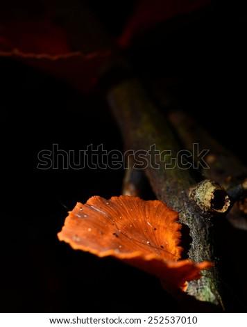 log mushroom, group of orange red mushroom grow on moss log in rain forest  - stock photo