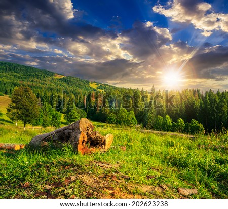 log of an old tree on a hillside near the pine forests in the mountains at sunset - stock photo