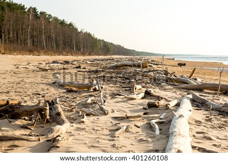 Log on the beach of Baltic sea (Selective focus)