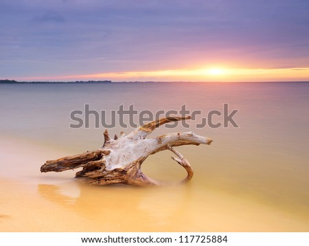 Log on the sand during bright sundown. Natural seascape. - stock photo