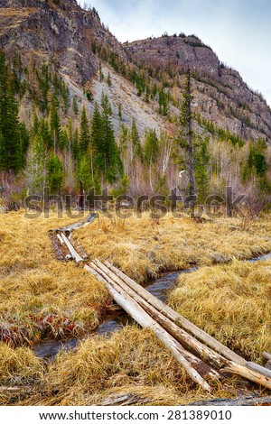 Log-path ower swamp in Altay tajga at early Spring time - stock photo