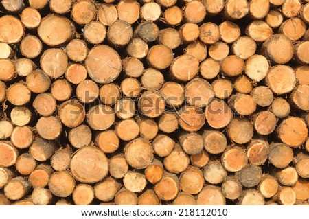 Log pile from deforestation  - stock photo