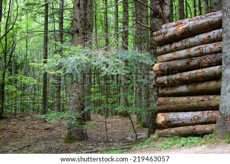 Log stack in the forest