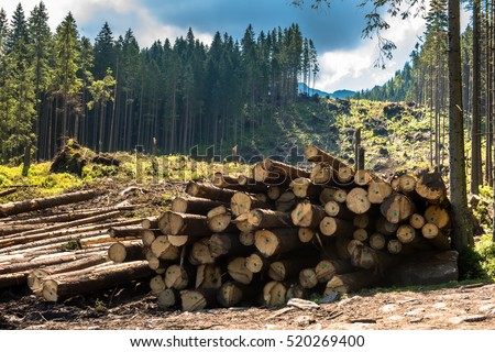 Log stacks along the forest road, Tatry, Poland, Europe