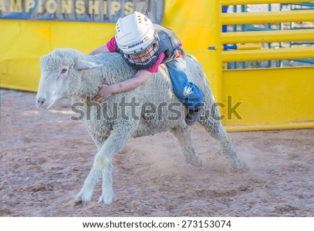 LOGANDALE , NEVADA - APRIL 10 : A boy riding on a sheep during a Mutton Busting contest at the Clark County Fair and Rodeo a Professional Rodeo held in Logandale Nevada , USA on April 10 2015  - stock photo
