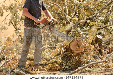 Logger trimming and delimbing oak trees at a new commercial construction development - stock photo