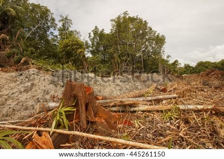 Logging deforestation environmental problem  - stock photo