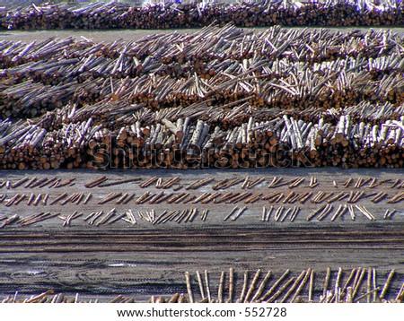 Logging Operation - stock photo