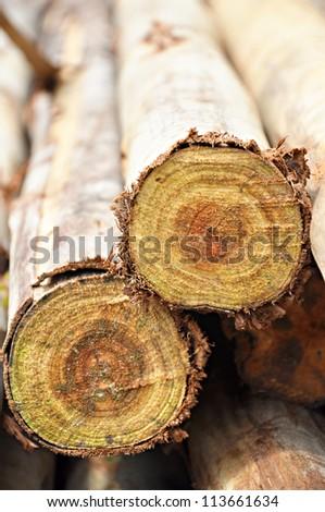 Logs from Eucalyptus trees - stock photo