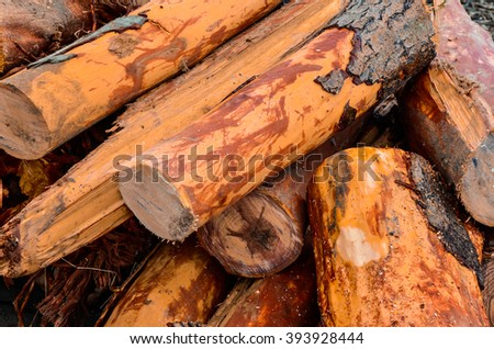 Logs gathered from the sea after the flood - stock photo
