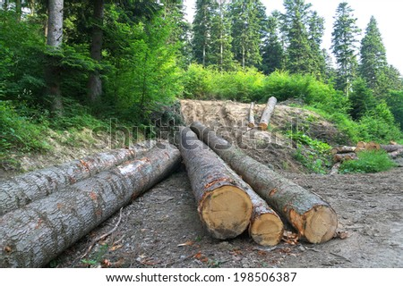 Logs of wood in the forest