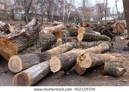 Logs on the ground. Photo can be used as a whole background. - stock photo